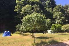 Camping in the Orchard for smaller tents