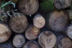 Logs seasoning